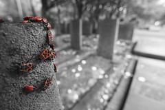Bugs (mark his view) Tags: sony a7r2 a7rii macro laowa camera app