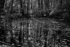 Reflections (markbangert) Tags: reflections wood forest trees swabian schwäbisch alb hills water nikon z6 fx
