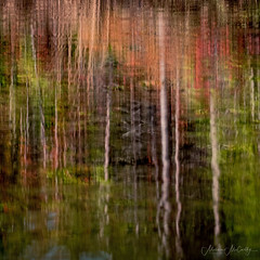 Fall Reflections (Melissa M McCarthy) Tags: fall reflection colors trees pond water ripple abstract art nature outdoor warm green orange red trunks landscape paradise newfoundland canada canon7dmarkii canon100400isii
