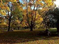 Autumn in St James' Park, London (BrooksieC) Tags: stjamespark park trees leaves grass nature london autumn fall
