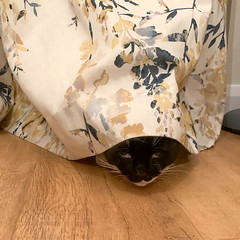 Day 274 - You can't see me (nualao) Tags: 365 cat pad year7 stockport england unitedkingdom