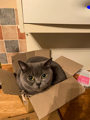 Day 281 - Cats and Boxes (nualao) Tags: 365 cat pad year7 stockport england unitedkingdom