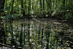 Reflections (markbangert) Tags: reflection reflections forest wood trees swabian schwäbisch alb hills water nikon z6 fx