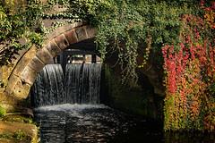 Autumnal Arch (Mister Oy) Tags: manchester autumn nikond850 50mm niftyfifty canal lock waterfall bridge arch rochdalecanal season fall seasonal