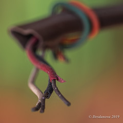Wires II (Desdanova) Tags: macro brown white black green wire macromondays orange red stockton california unitedstatesofamerica