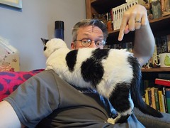 October 13th 2019 - Project 365 (Richard Amor Allan) Tags: cat feline moggy kitty project365
