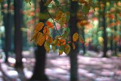 Pastel (Dumby) Tags: landscape ilfov românia edenland balotești fall autumn nature outdoor colors