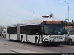 Winnipeg Transit #379 (vb5215's Transportation Gallery) Tags: winnipeg transit 2019 new flyer xd60 xcelsior
