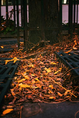 Messy fall (karholle) Tags: tree fall street streetpic streetpicture streetphotographie streetphotography automne outdoor color exterieur canon eos5dmarkii