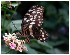 Photo of Butterfly...