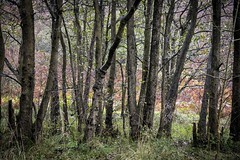 'Can't see the woods' (Taken By Me Photography) Tags: green woods woodland walk tree trees nikon north lancashire wet rain rainy weekend d750 takenbyme takenbymephotography wwwtakenbymephotographycouk