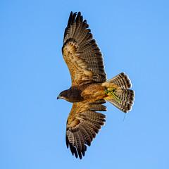 World Center for Birds of Prey, Boise, ID (epix360) Tags: nature birds wildlife boise prey raptors eagle hawk flight conservation idaho falcon falconer