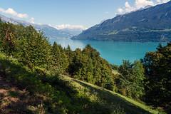 Lake Brienz (Bephep2010) Tags: 2019 7markiii alpen alpha berg bern brienzersee himmel ilce7m3 lakebrienz niederried niederriedbeiinterlaken sel24105g schweiz see sommer sony switzerland wald wolken alps clouds forest lake mountain sky summer ⍺7iii kantonbern