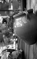 131019-35mm-027 (2) (salparadise666) Tags: nikon f3 hp eseries 35mm agfa apx 100 caffenol 15min nils volkmer analogue film vertical bw black white monochrome detail