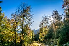Schwarzwasser-Tal (michael.tschiderer) Tags: herbst autum michael tschiderer weisenbach am lech reutte ausserfern tirol österreich nature sun heaven nikon fotographie