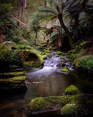 Erskine river, Otways (dmoyle37) Tags: trees forest water landscape fujifilm fuji longexposure river
