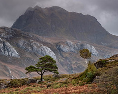 A pine, a birch and a mountain (Tim Allott) Tags: scotland highlands rocks cliffs bracken birch lochmaree slioch westerross landscapephotography scotspine hillslopes october2019 cloud rockslabs hillmist tree mountain munro