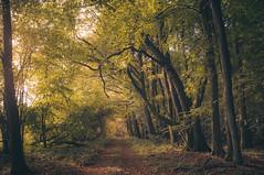 Autumn (JS-photographie) Tags: autumn herbst wald trees colours landscape landschaft natur nature natural nationalpark light licht fuji fujifilm fujinon x100