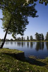 Tree [4] (wrona_czarna) Tags: tree river trees