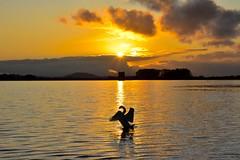 Somerset Sunset (Nige H (Thanks for 25m views)) Tags: nature landscape silhouette somerset cheddar cheddarreservoir swan lake reservoir sundown sunset england