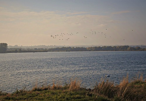 Geese passing over Rutland Water