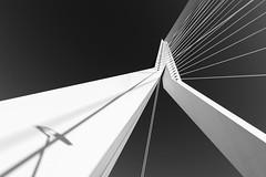 Shadow on the Swan (frank_w_aus_l) Tags: rotterdam erasmusbrug erasmus architecture sky city white nikon df nikkor 2470 black blackandwhite noiretblanc provinzsüdholland niederlande