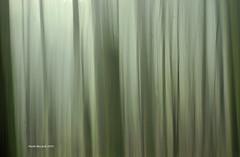 Moving forest Horizontal (RoyBatty83) Tags: pentax pentaxk5 k5 sportivo losportivo dahd55300wr pentaxdahd55300mmf458edwr pentaxdahd55300wr 55300 camaldoli eremodicamaldoli foreste parconaturale parconaturaledelleforestecasentinesi casentino tuscany appennine appennino mountains