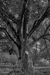 Bark (markbangert) Tags: tree trunk bark nikon z6 fx