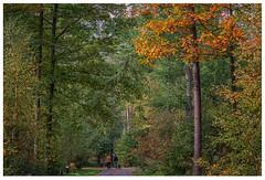 Vencimont Femke en Sean (marc.demeuleneire) Tags: selecteren autumn trees nature walk forest travel