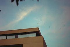 Birds (Germán Talavera) Tags: nikonfm2 luxembourg moody 35mm film analogue kodak gold