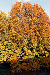 Baum (Pascal Volk) Tags: berlin althohenschönhausen berlinlichtenberg árbol baum tree herbst fall autumn otoño wideangle weitwinkel granangular wa ww natur nature naturaleza pflanze plant planta canoneosr 35mm canonrf24105mmf4lisusm dxophotolab