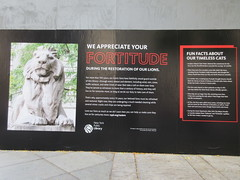 2019 Lions NY Public Library Still Renovating 5532 (Brechtbug) Tags: 2019 lions new york public library still done with renovations but they added pictures statues lion braving morning sunshine 42nd street 5th avenue nyc 10132019 october fall autumn weather eventually animal cat feline statue sculpture art cats ave st gargoyles gargoyle reclining repose resting facade stairs front entrance