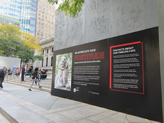 IMG_5529 (Brechtbug) Tags: 2019 lions new york public library still done with renovations but they added pictures statues lion braving morning sunshine 42nd street 5th avenue nyc 10132019 october fall autumn weather eventually animal cat feline statue sculpture art cats ave st gargoyles gargoyle reclining repose resting facade stairs front entrance