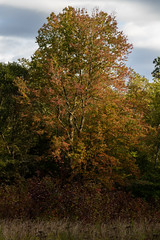 613A6171 (DavidMC92) Tags: canon eos 7d mark ii redden state forest delaware fall autumn colors trees efs 18135mm stm
