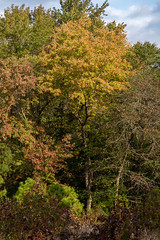 613A6170 (DavidMC92) Tags: canon eos 7d mark ii redden state forest delaware fall autumn colors trees