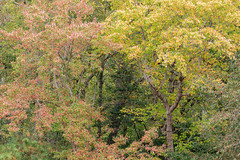 613A6166 (DavidMC92) Tags: canon eos 7d mark ii redden state forest delaware fall autumn colors trees ef100400mm l