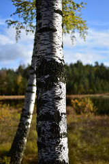 Motjenn (la1cna) Tags: reisen travel ruraltelemark nikon 35mmf2 nature pond woods tree hiking