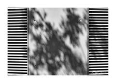Shadows (PeteZab) Tags: lines shadow leaves ventilation grill slat pattern blackandwhite mono bw peterzabulis