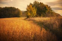 autumn time ... (proffkom_) Tags: autumn orestor meyer optik gorlits f28 m42 135mm ukraine bukovina village manual vintage analogue