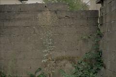 Wall of bricks (Germán Talavera) Tags: nikonfm2 luxembourg moody 35mm film analogue kodak gold