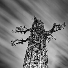 Transforest | Seattle WA (sunrisesoup) Tags: transforest dennysubstation seattle wa southlakeunion slu seattlecitylight