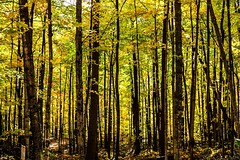 In the woods. Morgan Creek (Juniper Hill Garret) Tags: fallcolor trees forest