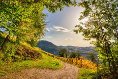 Blick auf den Schwarzwald (KaAuenwasser) Tags: schwarzwald weinberg reben landschaft kappelrodeck weg wiese natur berge wald licht schatten sonne herbst herbstlich laub dasenstein weinreben hdr 2019 oktober