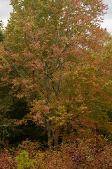 613A6167 (DavidMC92) Tags: canon eos 7d mark ii redden state forest delaware fall autumn colors trees efs 18135mm stm