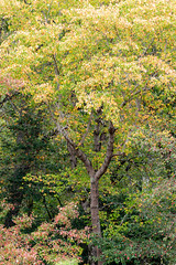 613A6165 (DavidMC92) Tags: canon eos 7d mark ii redden state forest delaware fall autumn colors trees ef100400mm l