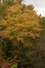 613A6164 (DavidMC92) Tags: canon eos 7d mark ii redden state forest delaware fall autumn colors trees ef100400mm l