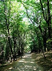 Hungría bosque (2013) (hakkon11) Tags: forest bosque trees shadows hungary