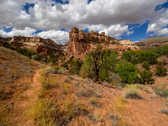 Deer Canyon (xjblue) Tags: 2019 escalantecanyonstocapitolreef october southernutah canyon desert fall landscape sandstone trip hike hiking scenic outdoors