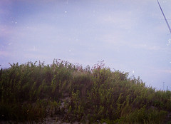 FALL 2019 (Thisispetey) Tags: summer2019 summer sun portrait portraitphotography wild waves walking nature life film filmgrain filmphotography kodakfilm kodak kodakgold 35mm 120mm develop ishootfilm shotwithfilm shooting shoot expression trees tropical olympus olympuspen olympuspenf olympuspenf1963 yashica yashicamat dekon dekonsr pentaxk1000 pentax disposable disney nashville georgia senoia welcome color exposure beautiful dream now hashtag