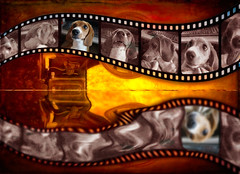 Lights Camera Lulu (DDM Imaging) Tags: dog art artist surreal surrealism movie film photoshop time patience filters layers clipart sony a7ii a7m2 photo photography photographs creation canine dogs puppies puppy sleep warmcolors flickrfriday